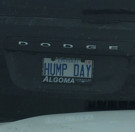 HUMP DAY PLATE